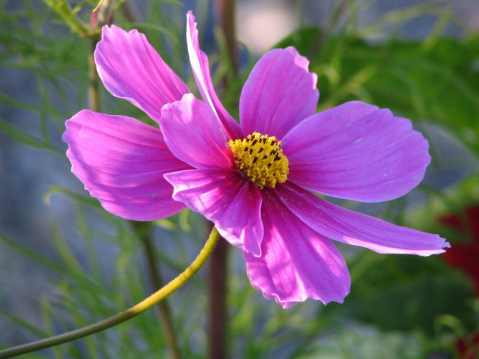 Close-Up Of Pink Flower Outdoors