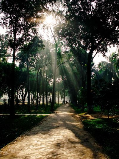 Sunrays are coming out on early winter morning Nature Nature_collection Naturelovers Nature Photography Landscape_Collection Sunrays Sun Green Rays Of Light Tree Tree Area Shadow Forest Tree Trunk Sunlight Sky Landscape Grass Countryside Empty Road Growing Foggy Country Road