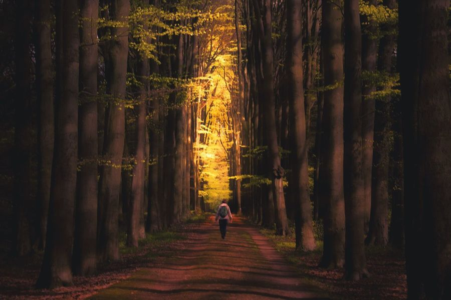 Sunset Lonely Alone Forestwalk Forest Dark Forest Walking In The Woods One Person Trees Light Trough The Trees Golden Silhouette