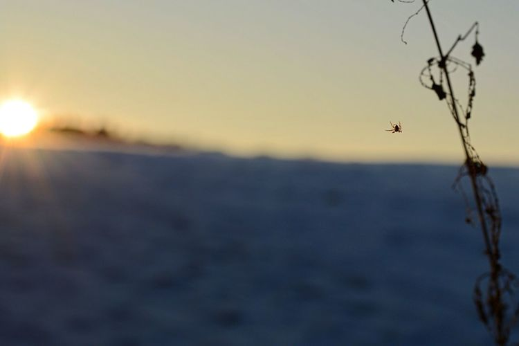 Focus On Foreground Nature Beauty In Nature Sunset Close-up Outdoors No People Animal Themes Sky Mountain Sundown Tranquility Tree Silhouette Scenics Beauty In Nature Spider Water Day