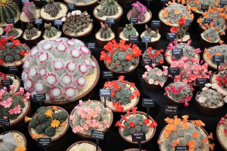 View Of Succulent Plants