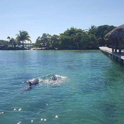 Hay van los dos par de tortulitos.😊😋 Honduras Roatan Vacaciones2015❤ Delfines  Noviembre Westbaybeach