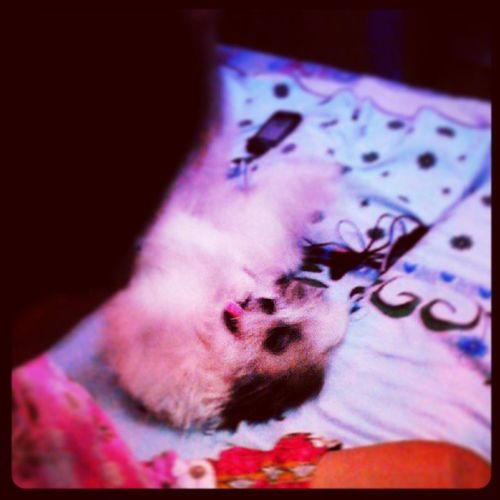 my only wish is for my bestfriend to live forever.. :'( Ripopoy Imissyou Pupplylove Lettingo Hardtoaccept