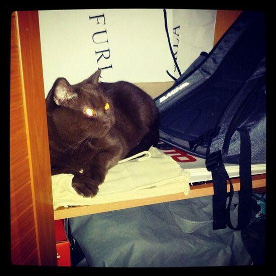 где искать кошку, которую не видел час другой? шкаф !
