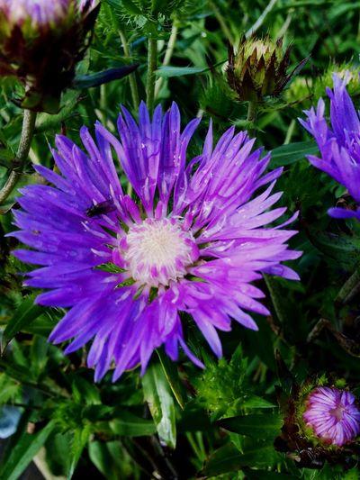 Flowers Purple Fly Summer