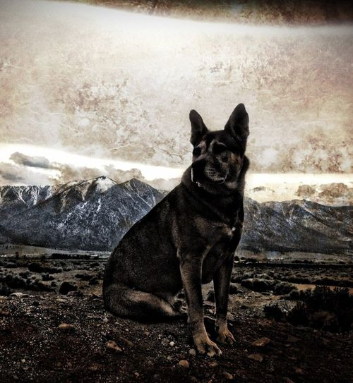 EyeEm Best Shots Tallac IPhoneography Bestoftheday First Eyeem Photo Dogs Back From The Dead Haters Gonna Hate Edit