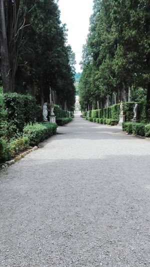 Giardino di Boboli Park - Man Made Space Nature Tree Day Outdoors No People The Way Forward Growth Sky EyeEmNewHere EyeEm Nature Lover Branch Freshness Boboligardens Florence Italy Garden Architecture Lost In The Landscape
