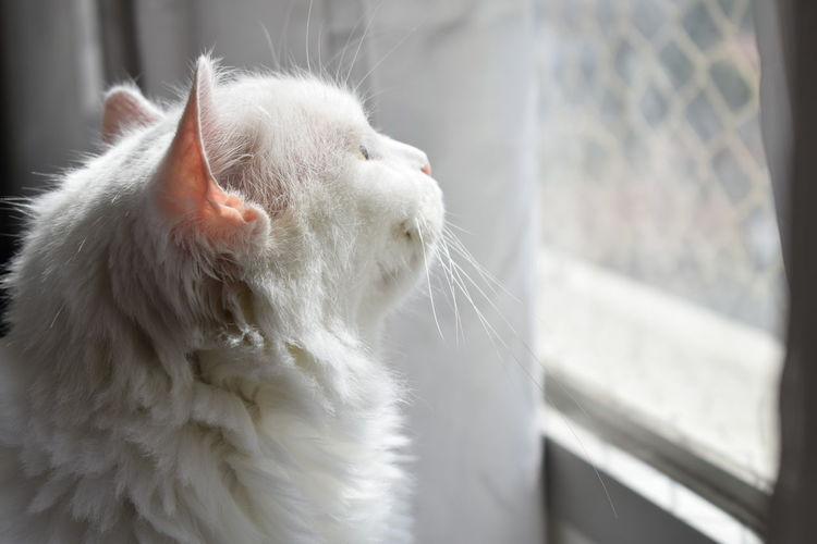 Animal Themes Cat Cute Animals Cute Cats Day Feline Friendship. ♡   Gatinhos Fofinhos Gatos 😍 Looking At The Window No People White Cat