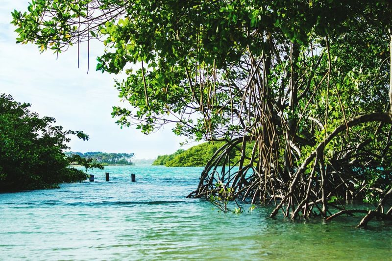 Water Tree Nature Beauty In Nature Tropical Climate Scenics Tranquility Forest Vacations Travel Destinations Outdoors Tranquil Scene Love ♥ Tranquility Scene árvores Sunset Flower Love Fotografia Espontanea Nature Beauty In Nature Sea Day Stilt House Adult