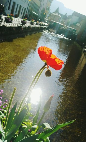 Flower Thiou Annecy First Eyeem Photo