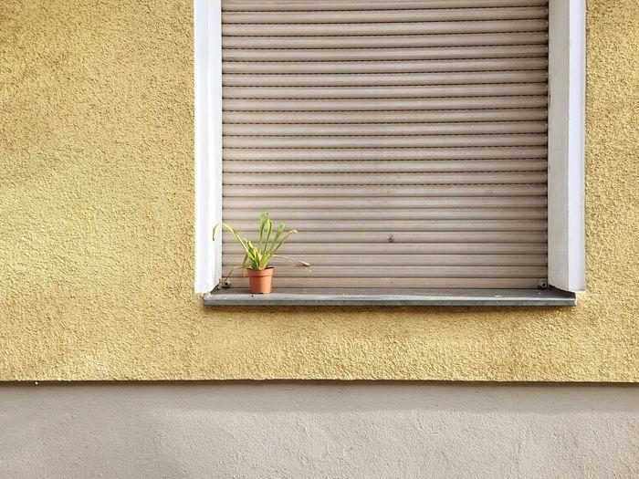 Plants growing on window sill