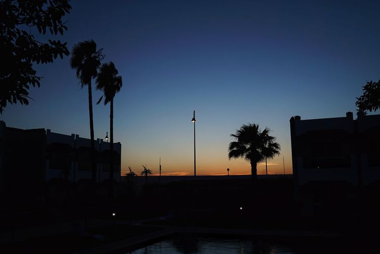Morocco Photos Treepark Tree Night Silhouette Sunset No People Street Light Palm Tree Sky Outdoors City Nature Beauty In Nature Architecture Tranquility Landscape Tranquil Scene Travel Hotel Morocco Scenics Streamzoofamily