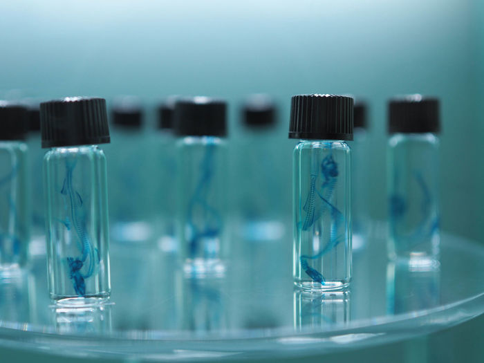 Close-Up Of Sample Bottles In Laboratory