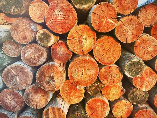 Log Firewood Lumber Industry Deforestation Abundance Large Group Of Objects Stack Wood - Material Timber Full Frame Backgrounds Environmental Issues Arrangement Heap Woodpile Pile Fuel And Power Generation Fossil Fuel Order Repetition