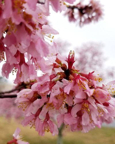 spring time in