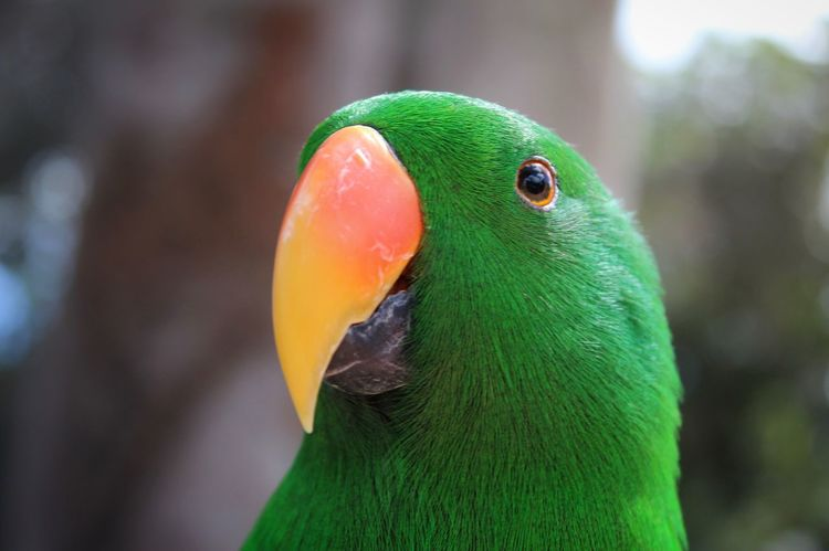 Bird Animal Themes Close-up Animals In The Wild Focus On Foreground Beak One Animal Animal Wildlife Green Color Parrot No People Day Outdoors Nature Beauty In Nature Cotorra The Great Outdoors - 2017 EyeEm Awards Neon Life Pet Portraits Paint The Town Yellow This Is Latin America