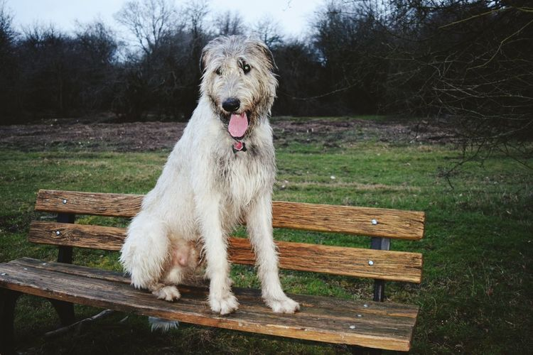 Benches_Of_The_World_Unite Herrenkrugpark One Animal Dog Animal Themes Pets Domestic Animals Nature Outdoors The Places I've Been Today Winter 2017 March 2017 How Is The Weather Today? Dogs Of EyeEm Dogslife Bokeh Dog Of The Day Dogs Of Winter Irish Wolfhound Cearnaigh Portrait Dogwalk