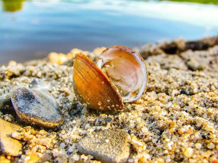 Shell EyeEm Selects EyeEmNewHere Beauty In Nature Eeyem Nature Lover EeYem Best Shots EyeEm Nature Lover UnderSea Sea Life Sea Beach Sand Coral Jellyfish Seashell Underwater Hermit Crab