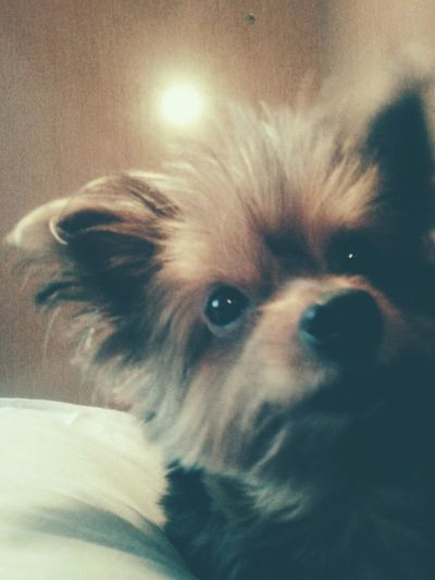 Mydog♡ Taking Photos Relaxing
