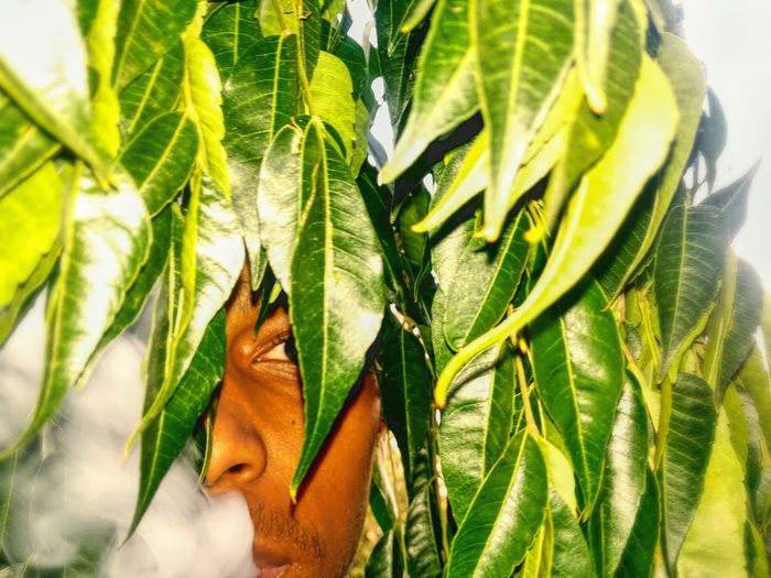Man VS Nature Smoke Jungle Man Nature_collection Nature Tree Leaf Close-up Green Color Plant Blooming Petal In Bloom Flower Head Palm Leaf The Portraitist - 2019 EyeEm Awards The Great Outdoors - 2019 EyeEm Awards The Mobile Photographer - 2019 EyeEm Awards