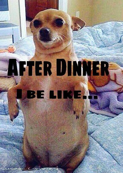 Captionphoto Funny Memes Viral EyeEm Animal Lover Photooftheday