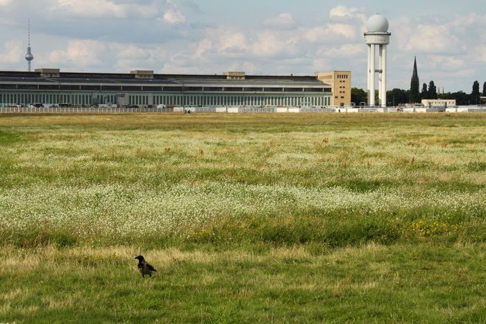 Grass Field Nature Day No People Animal Themes Outdoors One Animal Growth Landscape Sky Summer Atmospheric Mood Berlin Tempelhofer Feld Water Beauty In Nature Bird