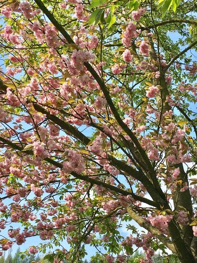 Beautiful spring Time Spring Tree Beauty Spring