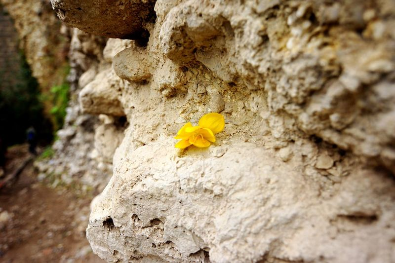 SPAIN Ronda Rocks Flower Capture The Moment Taking Photos