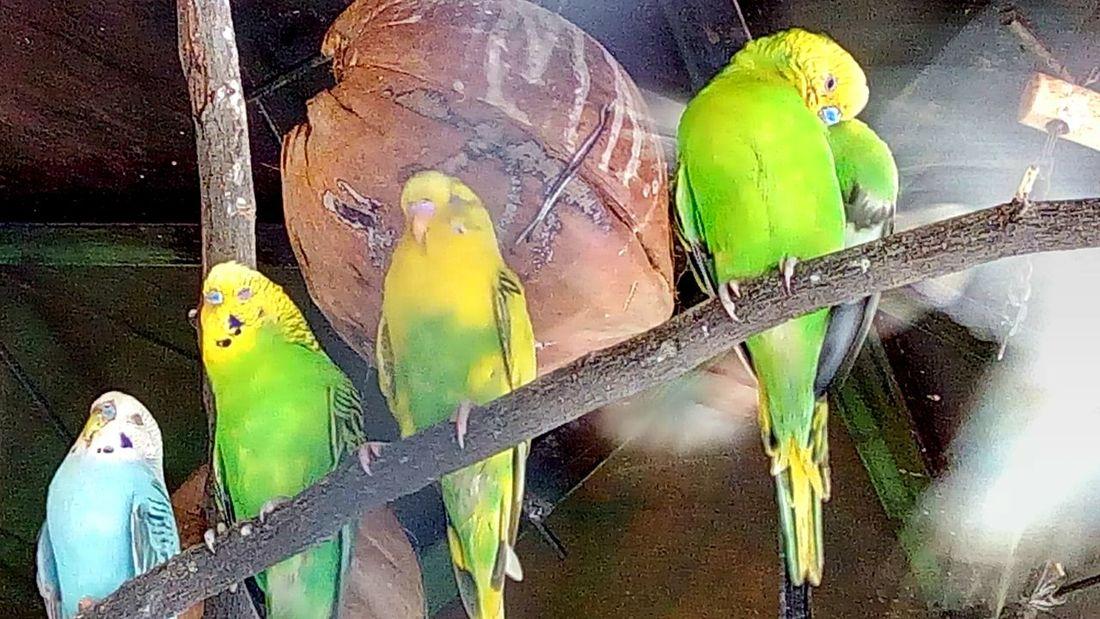 Bird Bird In The Zoo
