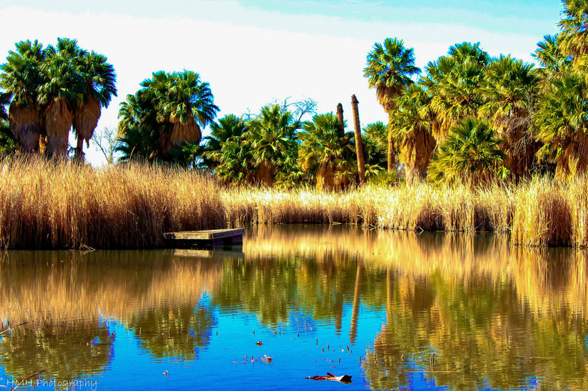 Beauty In Nature Calm Desert Desert Oasis Dock Geometry Growth Horizontal Symmetry Lake Oasis Outdoors Pond Reflection Relaxing Moments Rippled Standing Water Symmetry Tree Tucson Arizona  Water Waterfront