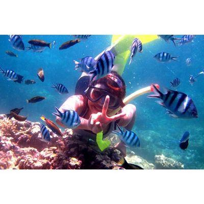 Pulau Karimun Jawa - Jepara Jawatengah Diving Ayodolan