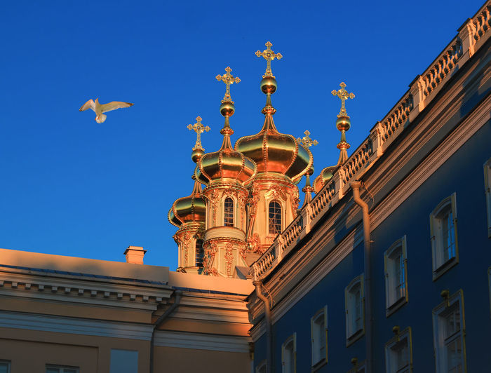 Low Angle View Of Seagull Flying By Onion Domes Of Catherine Palace