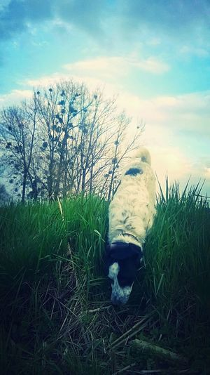 Dog Dogs Animals Animal Themes Animal Photography Chiende Berger Chiens Chien Animal Domestic Animals One Animal