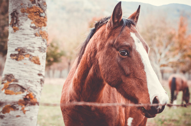 Horses Animal Themes Brown Close-up Domestic Animals Horse Looking At Camera Mammal Nature No People One Animal Outdoors Portrait Standing Tree