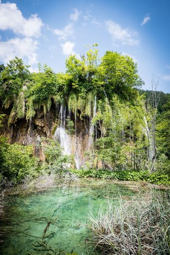 Plitvice lake Waterfall Plant Plitvice National Park Plant Sky Water Tree Nature Cloud - Sky Growth Outdoors Scenics - Nature Beauty In Nature