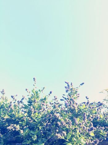 Blossom Flowers Sky Minimalism