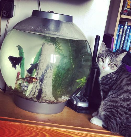 My fish and cat 💙 Myfamily Myfamilypets Catandfish Bioorb Domestic Cat Pets Animal Themes Cat Domestic Animals Feline Indoors