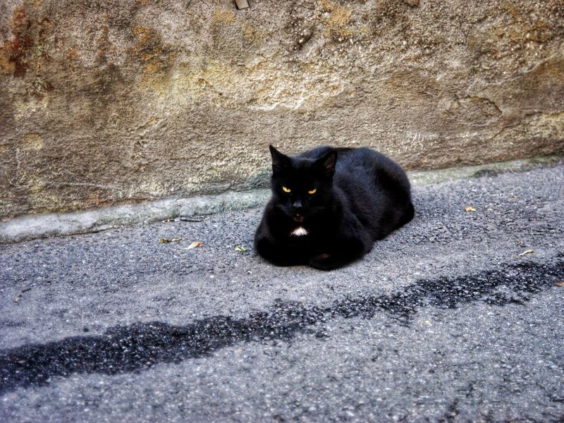 Alertness Animal Animal Head  Animal Themes Black Cat Black Color Cat Curiosity Day Domestic Animals Domestic Cat Feline Looking At Camera Mammal No People One Animal Outdoors Pets Portrait Sitting Stray Animal Urban Nature Whisker Zoology Welcome To Black