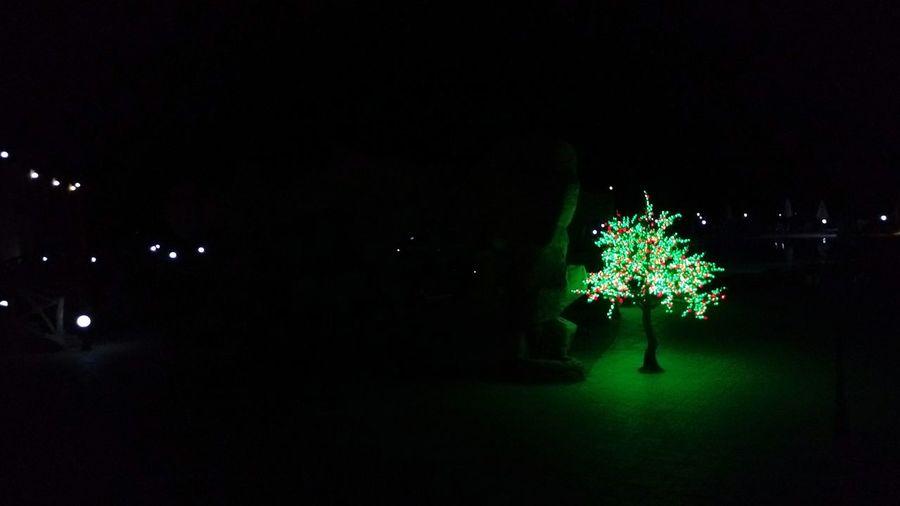 Tree Pretend Tree Pretend Night Lights Darkness And Light Light In The Darkness