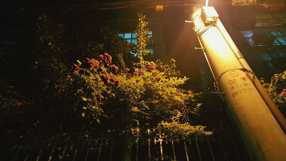 장미 Rosé Flower 꽃