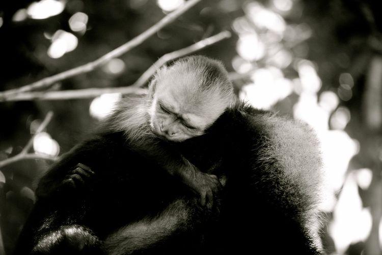 Close-up of monkeys sleeping on tree