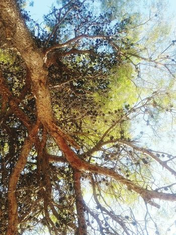 Tree Low Angle View Nature Day Growth Beauty In Nature Outdoors No People Forest Branch Sky Close-up