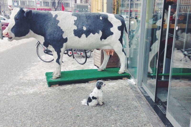 Waiting Dogs Dog