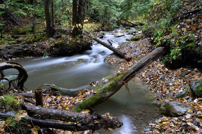 BC Creek, B.C. Canada Autumn Calm Creek Forest Hiking Leaves Lichen Long Exposure Lush Moss Mountains Mystical Nature Soothing Stream Trees Zen
