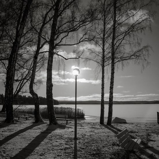 B&W Tree Tranquility Nature Beauty In Nature Tranquil Scene Light countersun No People Outdoors snow EyeEmNewHere EyeEmNewHere