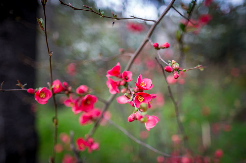 Beauty In Nature Close-up Day Flower Flowering Plant Fragility Freshness Growth Nature No People Outdoors Plant Vulnerability