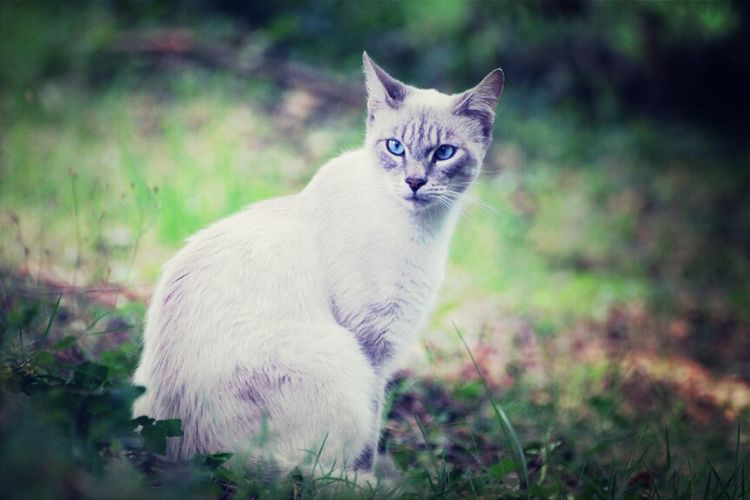 Cat looking away white sitting on field