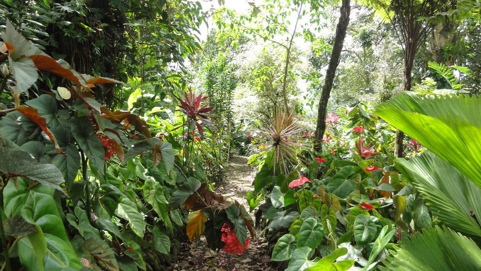 Beautiful Nature Botany Exploring Flower Freshness Garden Green Green Color Growing Growth In The Jungle Leaf Nature Plant Tropical Climate Walking Alone... Walking Around