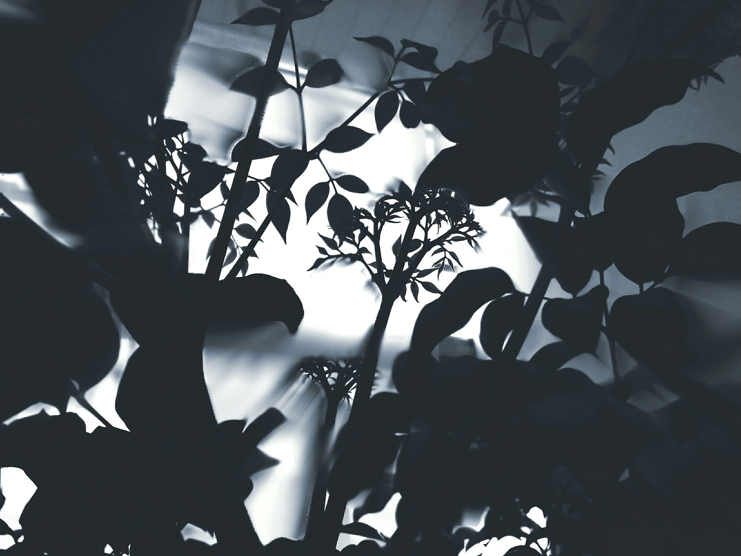 low angle view, indoors, lighting equipment, silhouette, illuminated, leaf, tree, growth, ceiling, sunlight, hanging, branch, no people, window, home interior, plant, nature, day, close-up, decoration