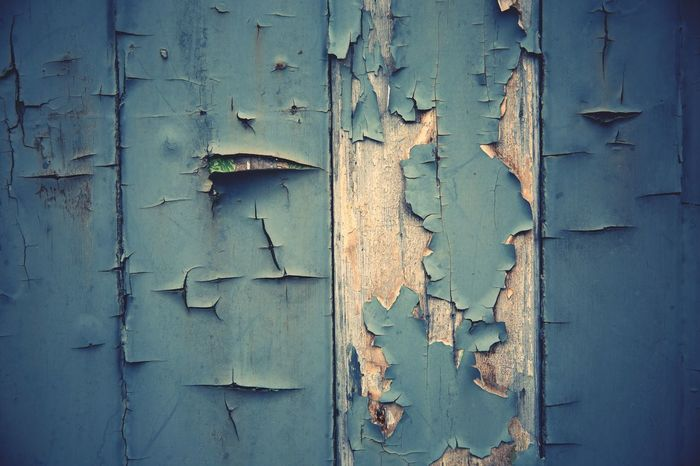 blistered and peeling blue paint on top of worn and weathered wood in a texture background image with copy space Blistering Paint Blue Worn Weathered Paint Texture Copy Space Weathered Wood Peeling Paint Blistering Backgrounds Full Frame No People Backgrounds Wood - Material Old Day Close-up Weathered Decline Door Textured  Peeling Off Entrance Deterioration Damaged Run-down Built Structure Outdoors Abandoned